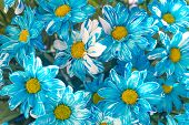 beautiful blue and yellow floral background