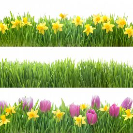 stock photo of grass  - Green grass and spring flowers isolated on white background - JPG