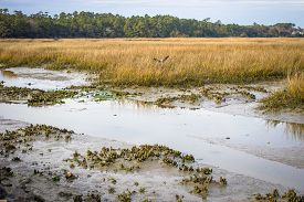 stock photo of inlet  - Lowcountry wetlands in Huntington Beach State Park is a haven for birdwatchers and wildlife - JPG