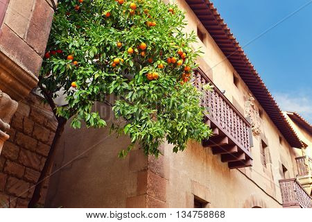 orange tree in