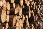 Firewood A Heap
