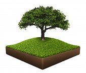 Постер, плакат: Участок земли с деревом