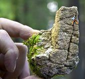 Tiny Rockface