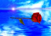 Red Rose Reflected In Water