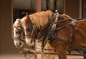 foto of stagecoach  - a team of work horses hitched to a stagecoach - JPG