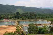 Malaysian Prawn Farms