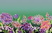 Colorful Summer Wide Banner. Vivid Iberis Flowers With Green Leaves On Gradient Green Background. Ho poster