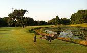 Birds on the golf course