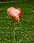 Flamingo bird perched sleeping