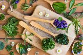 Fresh Wild Edible Spring Herbs On Wooden Spoons: Ground-ivy, Veronica, Chickweed, Violet Flower, Wil poster