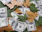 American Dollars And Autumn Leaves