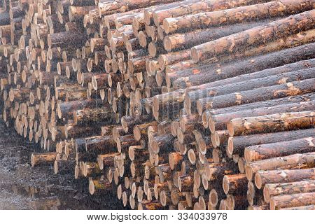 poster of Natural Wooden Logs Cut And Stacked In Pile, Felled By The Logging Timber Industry. Pile Of Felled P