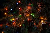 Christmas Tree Branch And Lights poster