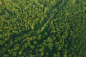 Aerial View Of Green Forest Landscape. Top View From High Attitude In Summer Evening. Small Marsh Bo poster