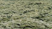 Moss Covered Lava Fields, Also Known As Green Lava In Skaftareldahraun, Iceland poster