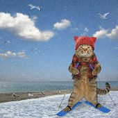 Cat Skiing Along The Sea poster