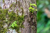 Young Green Shoots On The Trunk Of An Old Tree. Young Sprout On An Old Brown Trunk In The Rays Of Th poster