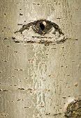 Tree Bark With Eye design
