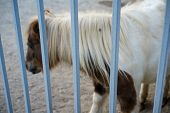 Pony Is Behind The Bars Of The Zoo.pony Is Behind The Bars Of The Zoo. poster
