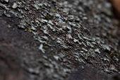 Tree Bark In Autumn. Macro Photography.tree Bark In Autumn. Macro Photography poster