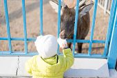 A Child Feeds A Deer In A Zoo.a Child Feeds A Deer In A Zoo poster
