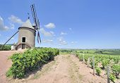 Windmill in french vineyard