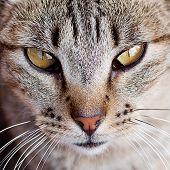 Retrato de um gato listrado ao ar livre