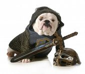 dog dressed up as a knight isolated on white background - english bulldog