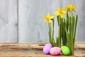 image of daffodils  - Cute photo with easter eggs and daffodils - JPG