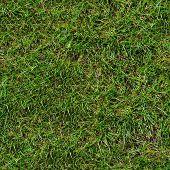 Hierba verde. Textura sin fisuras.