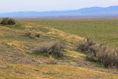 Vast Grasslands