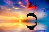 Beautiful calm ocean at sunset. Dolphin jumping silhouette