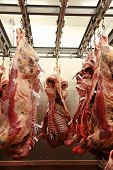 stock photo of slaughterhouse  - Cattle carcass maturing in the refrigerator of an abattoir - JPG