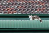 Stray Cat On A Roof