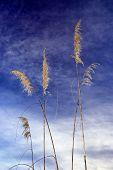 Toi toi plant against blue sky