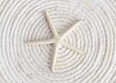 Starfish on White Coiled Rope