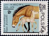 POLAND - CIRCA 1978: A stamp printed in Poland and shows horse with a baby circa 1978