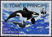 SAO TOME - CIRCA 1980: A stamp printed in Sao Tome shows orcinus orca circa 1980