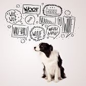 stock photo of border collie  - Cute black and white border collie with barking speech bubbles above her head - JPG