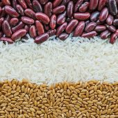 stock photo of kidney beans  - Mixed Grains Of Wheat Grain - JPG