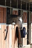 stock photo of horse face  - White horse in the Stable  - JPG