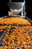 Dried Apricot Factory