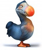 picture of terrestrial animal  - Dodo - JPG