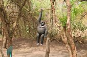 stock photo of gorilla  - wooden gorilla hanging on the tree by one hand - JPG
