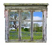 stock photo of bluebonnets  - Old rustic window frame with Texas bluebonnet country vista in spring isolated - JPG