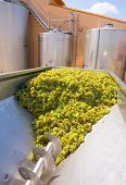 chardonnay corkscrew crusher destemmer in winemaking with grapes