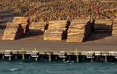Stacks Of Tree Trunks Ready For Export By Sea