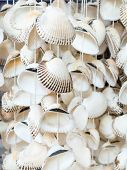 image of keepsake  - Seashells a typical souvenir of the Black Sea - JPG