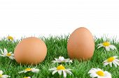 Two Eggs With Artificial Grass