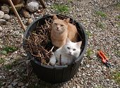 Two Cats In Garden Tub